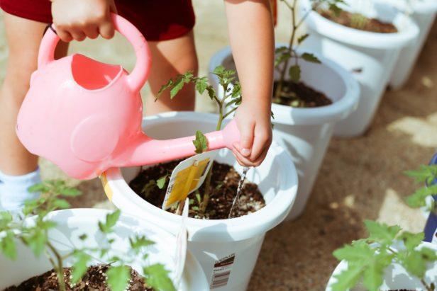 子どもといっしょに植物を育ててみよう