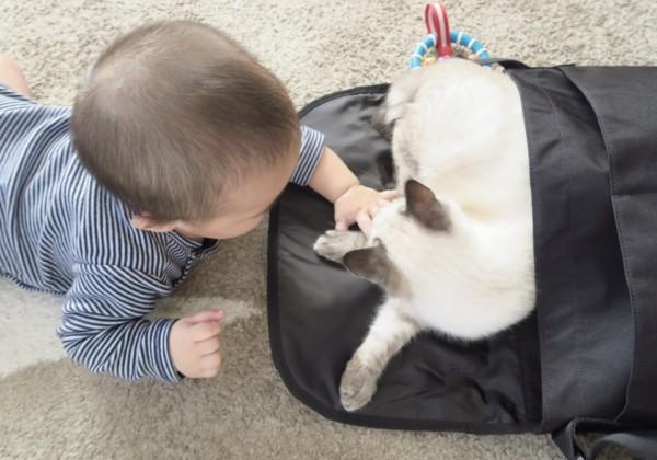 ネコと赤ちゃんって一緒に暮らせる?