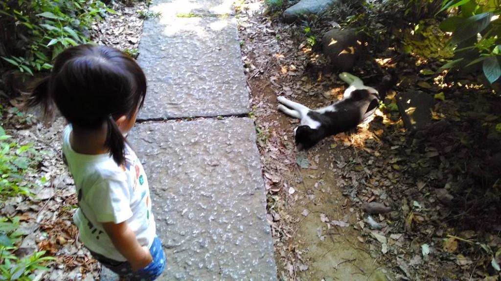 何が気になる?ネコと赤ちゃんの生活